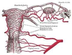 Acupuncture For Uterine Blood Flow