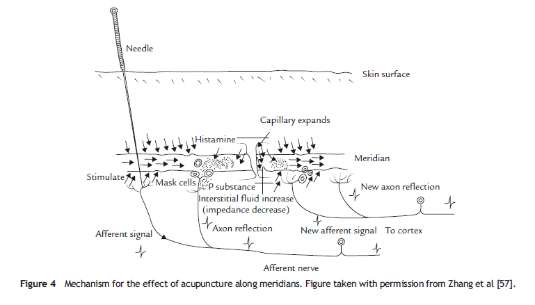 Mechanism-for-the-effect-of-acupuncture-along-meridians